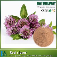 Supplier women health product red clover flower extract powder / red clover P.E. 40% Isoflavones