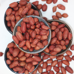 Chinese good quality the biggest groundnut factory peanuts