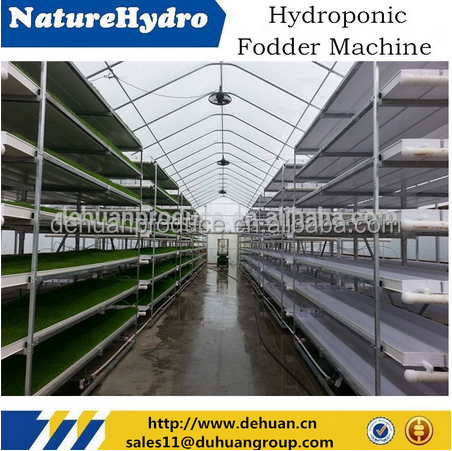 hydroponic fodder grass seeds trays sprout machine
