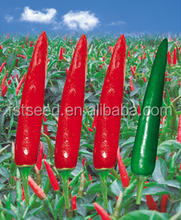 Upright Single Hot Pepper/Chilli Seed For Sale Yan Hong 100