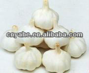 fresh Garlic Flavour for food