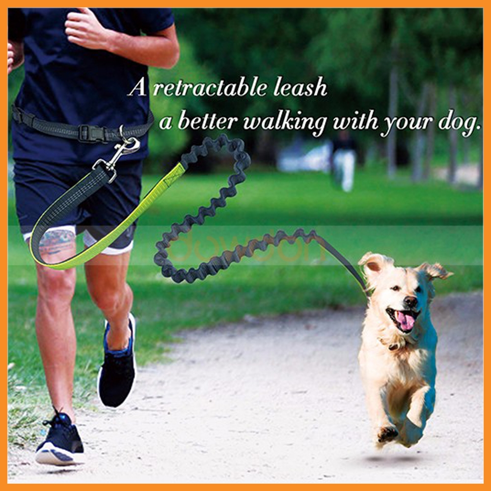 OEM Custom Reflective Bungee Running Nylon Hands Free Dog Pet Leash