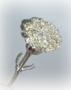 999 Silver Dipped Natural Carnation