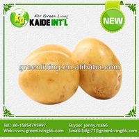 ZLM new crop China holland fresh potato for Singapore market(best quality and price)
