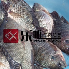 live tilapia fish us farm raised tilapia