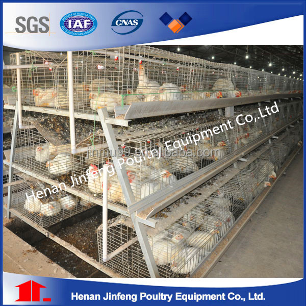 Egg Collecting System High Quality Automatic Poultry Layer Cages/automatic chicken layer cage for sale in philippines