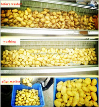 Potato Peeling Machine / Carrot Peeling Machine / Vegetable & Fruit Peeler