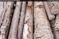 product wood & waste kachi wood for biomass