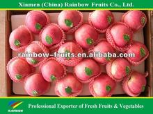 Fresh red star apple