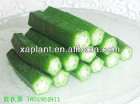 100% high quatity dried okra powder