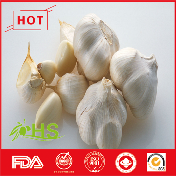 New Fresh White Garlic Wholesale price