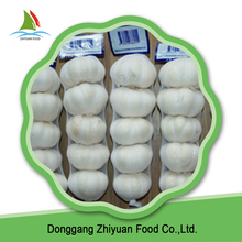 White garlic with best value and reasonable price on sale