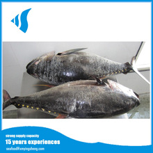Hot selling Frozen yellow fin tuna fish exported from China