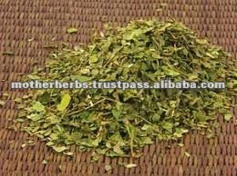 Gymnema Sylvestre Leaves - Strong Antioxident