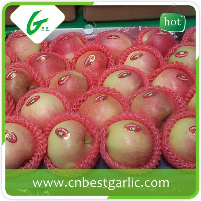 Fresh Chinese delicious fruit crisp gala apple