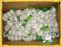 Garlic China/Ajo BROTHER KINGDOM/Pure white garlic from origin