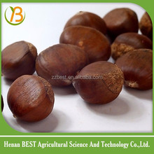 chinese natural chestnut for sale