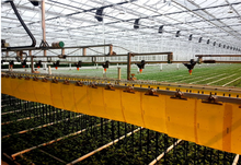 China Low Price Greenhouse Drip Irrigation System Systems