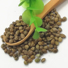 huo ma ren high quality best price Hemp kernels seeds for planting use