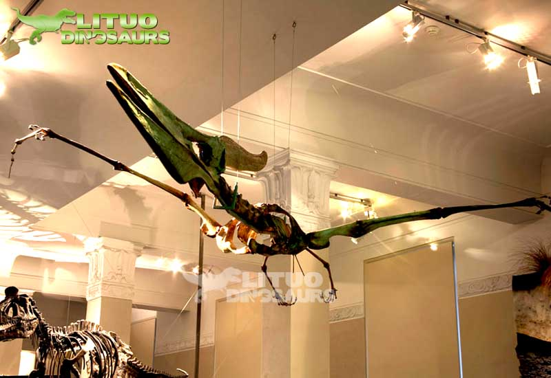 Museum Exhibitions Life Size Pteranodon Skeleton