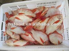 Frozen Whole Round Red Tilapia