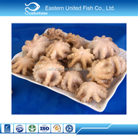 china seafood iqf cheap price size 20-60g/pcs frozen baby octopus