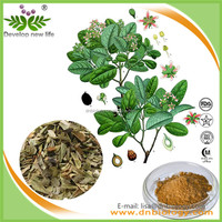 Manufacture Sell Natural Herbal Extract Boldo Leaf Extract,Peumus Boldus Extract Powder, Boldo Extract ISO certificate