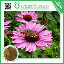 Antiseptic top quality plant extract echinacea purpurea extract Cichoric Acid 4% 2% Polyphenols 4%