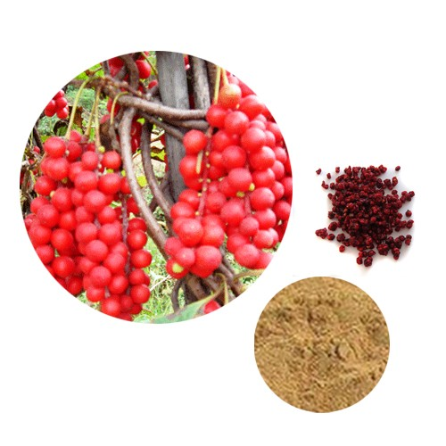 Low price 2%, 5%, 9% schisandrins schisandra fruit berries p.e