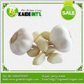 wholesale dehydrated garlic