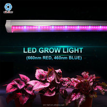 FCC certificate hydroponics lettuce special red and blue growing led light for plant growth