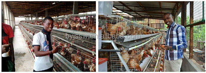 Uganda Poultry Farm Automatic Chicken Layer Cage For Sale