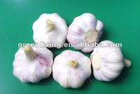 2012 dried purple garlic supplier