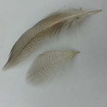 CDC feather