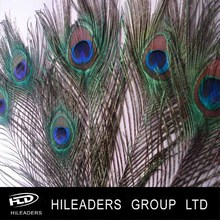 High Quality Peacock Feather For Decoration AH32