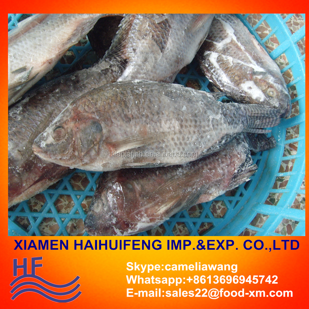 Tilapia W/R - Gutted & Scaled from China. Skype:cameliawang