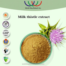In stock HACCP GMP Factory making hepatoprotective raw material 80% silymarin extract powder,silymarin & milk thistle extract