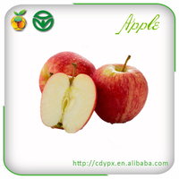 2015 china best price fruit chief crisp red royal gala apple for sale
