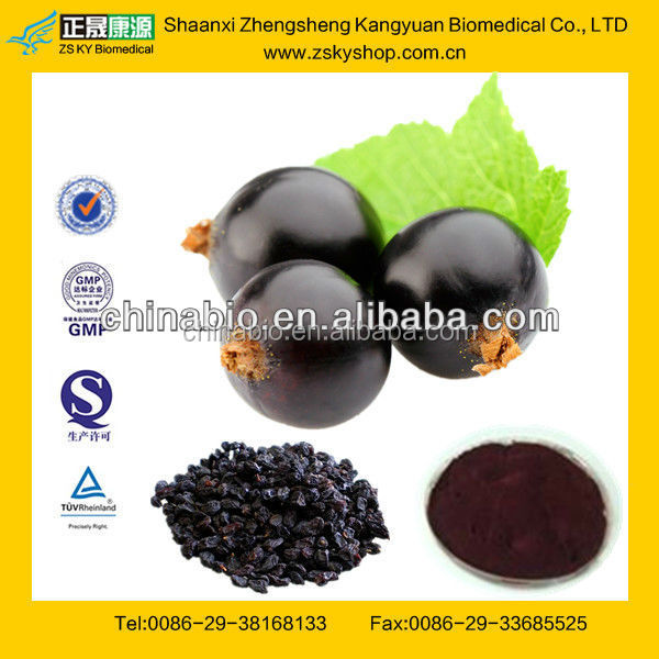 GMP Manufacturer Supply Natural Black Currant Seed Extract