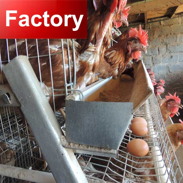 Factory automatic systems customized a type laying egg chicken cages high quality
