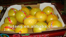 Chinese low price Fresh Pomelo Honey Pomelo Juicy Pomelo with high quality