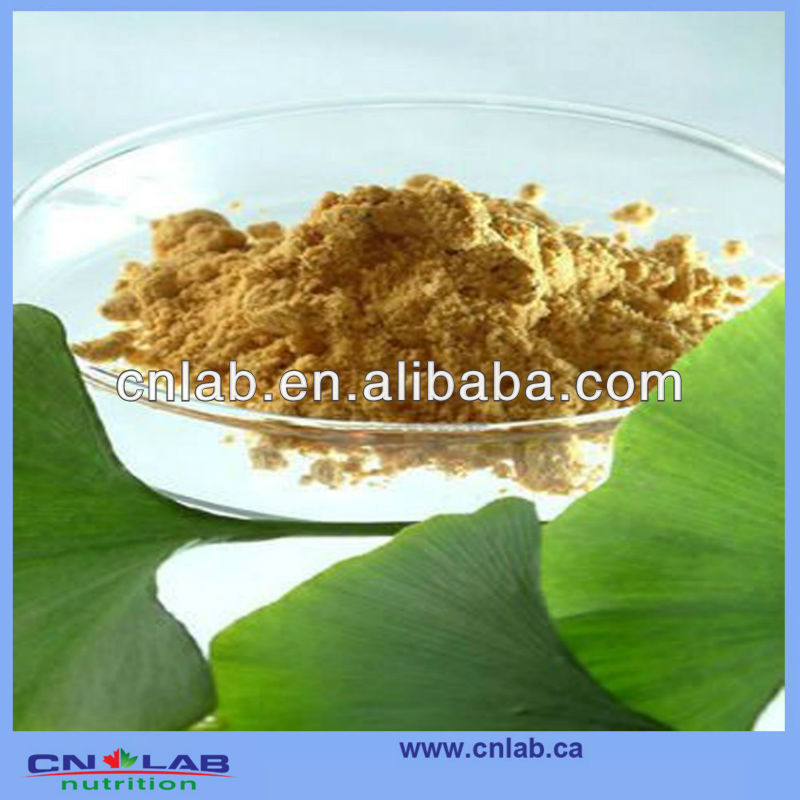 Top Quality Flavonoids Ginkgo Biloba Extract---For Health And Madical
