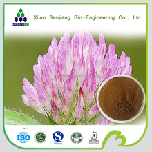 High quality Red clover P.E. / Trifolium Pratensel extract Red clover extract powder Isoflavone