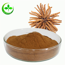 Hot sale high quality natural cordyceps sinensis extract powder / winter worm summer herb