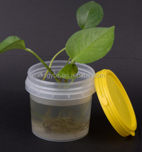 small food grade clear plastic buckets with lids