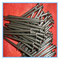 "2.5"" poilshed galvanized common nails"