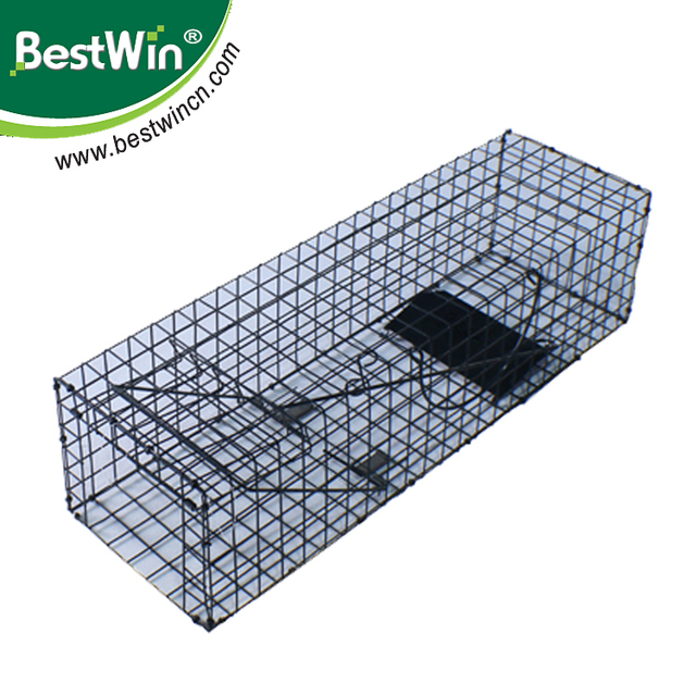 BSTW over 10 years experience factory large rodent metal outdoor metal animal cage