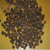 Tan Xiang Wholesale Cheap Sandalwood Seeds for Growing