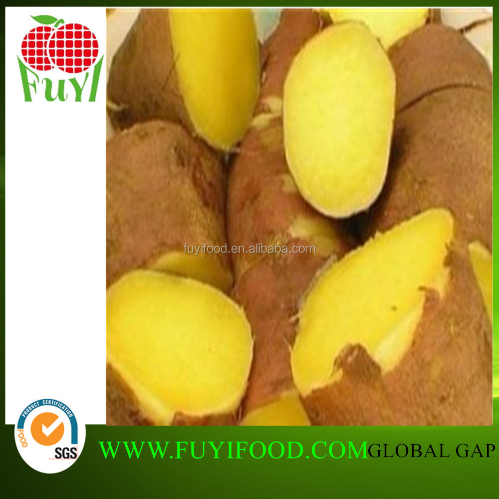 New harvest food yellow sweet potato sale in low market price
