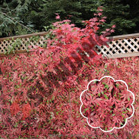 Red maple artificial leaf barrier fence